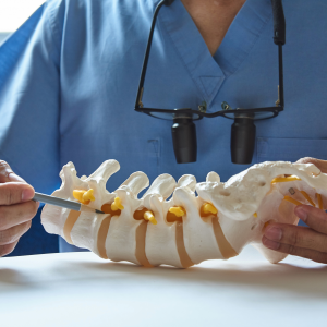 Doctor Examining Skeletal Spine